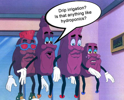 Currant Hydro